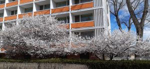 Hotel Belvedere Eforie Nord by Afrodor Resort 002